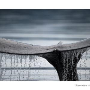 Carte baleine – Epuisée