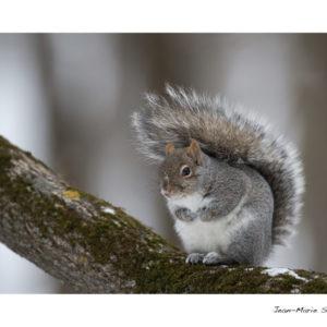 Carte écureuil